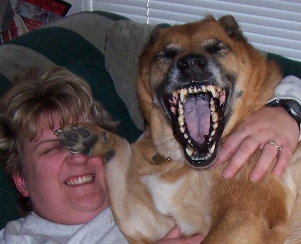 funny-laughing-dog.jpg