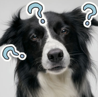 dogquestion2.png